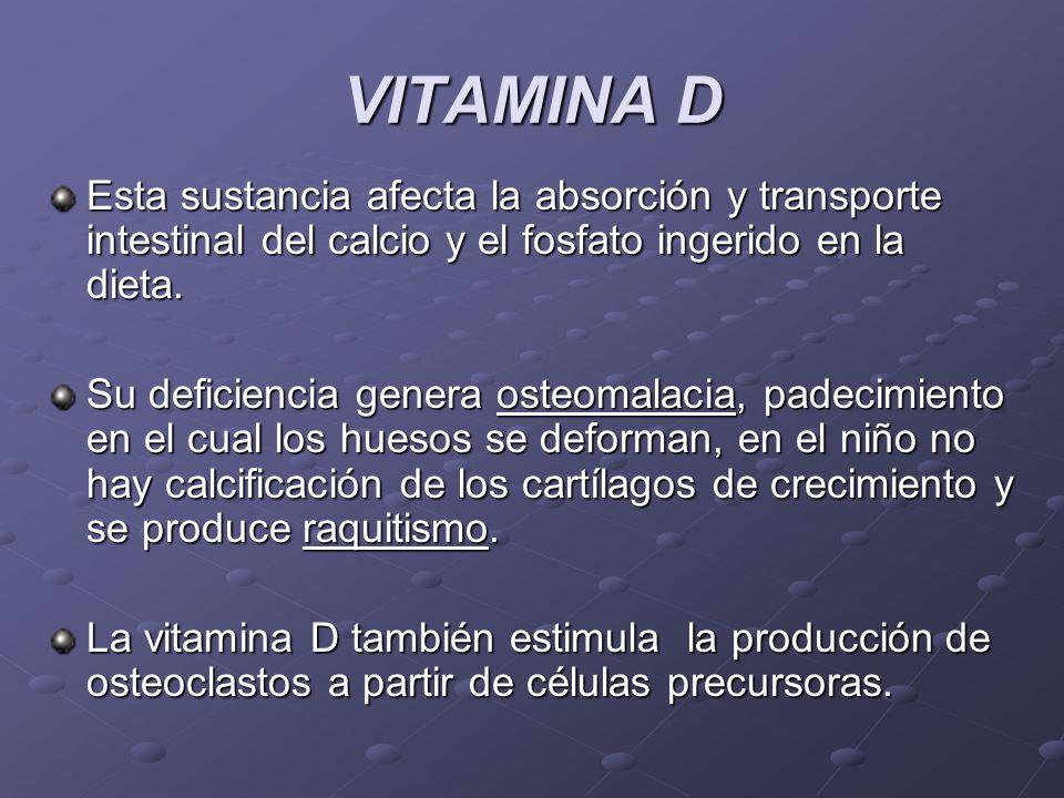 VITAMINA D Esta sustancia afecta la absorción y transporte intestinal del calcio y el fosfato ingerido en la dieta. Su deficiencia genera osteomalacia