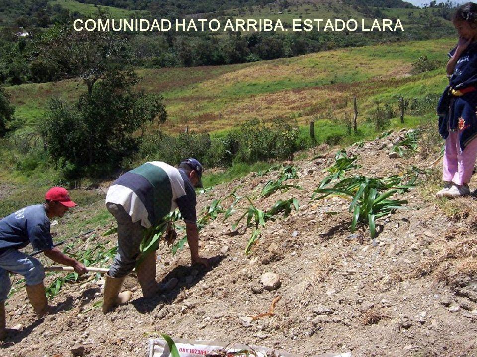COMUNIDAD HATO ARRIBA. ESTADO LARA