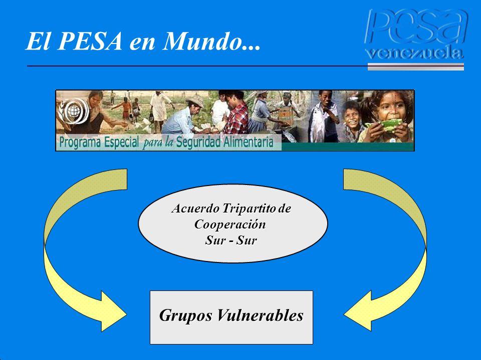 El PESA en el Contexto Nacional Desconocimiento de la dieta balanceada y bajo consumo de vegetales.