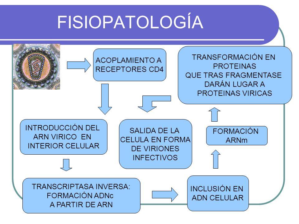 FISIOPATOLOGÍA INTRODUCCIÓN DEL ARN VIRICO EN INTERIOR CELULAR INCLUSIÓN EN ADN CELULAR ACOPLAMIENTO A RECEPTORES CD4 TRANSCRIPTASA INVERSA: FORMACIÓN