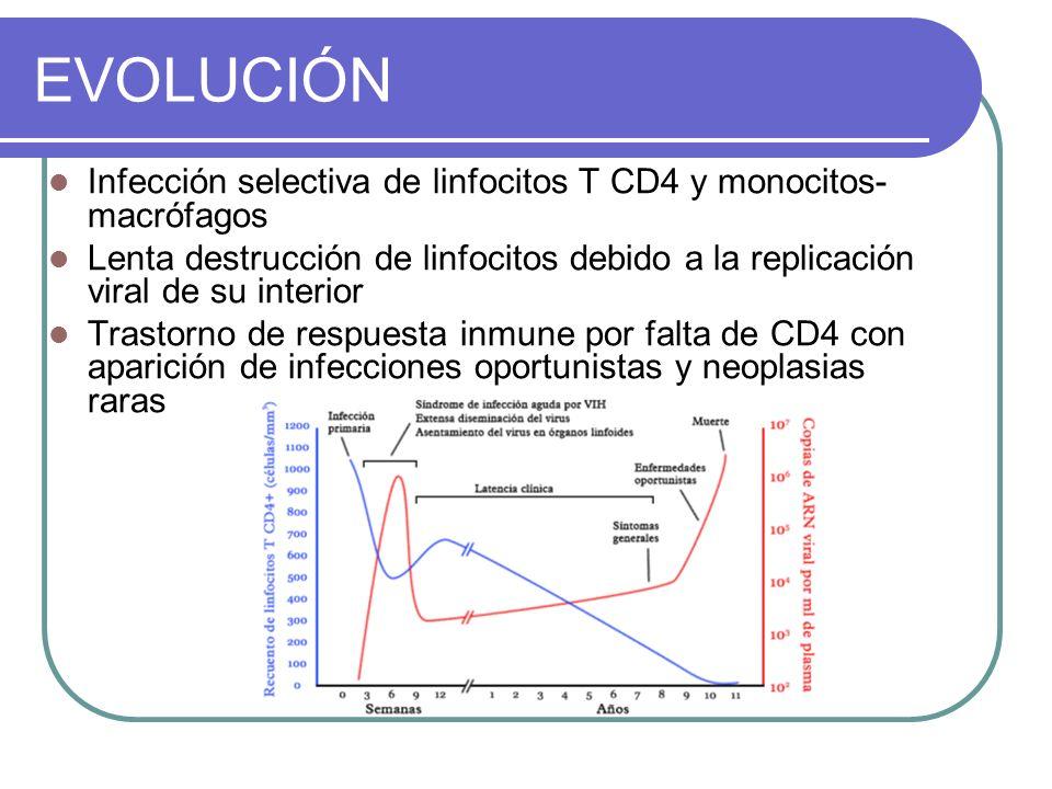 EVOLUCIÓN Infección selectiva de linfocitos T CD4 y monocitos- macrófagos Lenta destrucción de linfocitos debido a la replicación viral de su interior