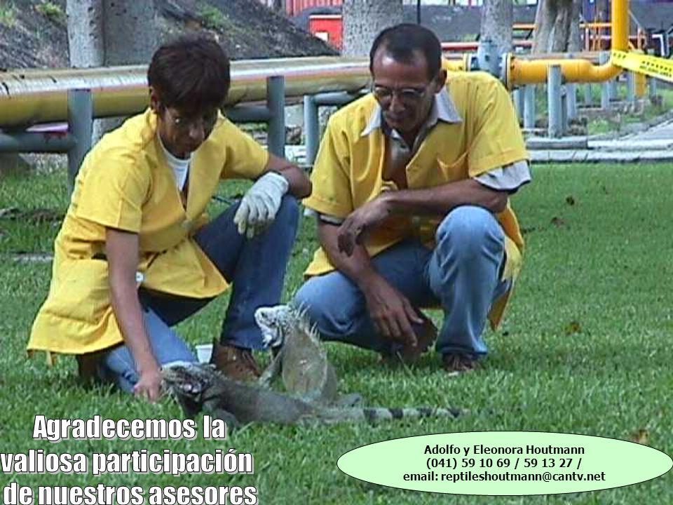 Adolfo y Eleonora Houtmann (041) 59 10 69 / 59 13 27 / email: reptileshoutmann@cantv.net