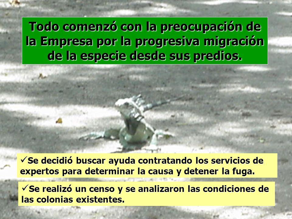 Todo comenzó con la preocupación de la Empresa por la progresiva migración de la especie desde sus predios. Se decidió buscar ayuda contratando los se