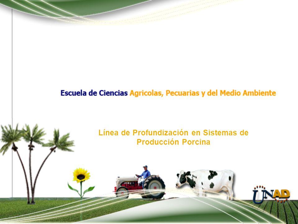 Línea de Profundización en Sistemas de Producción Porcina