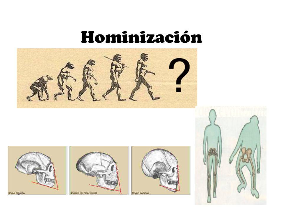 Hominización.