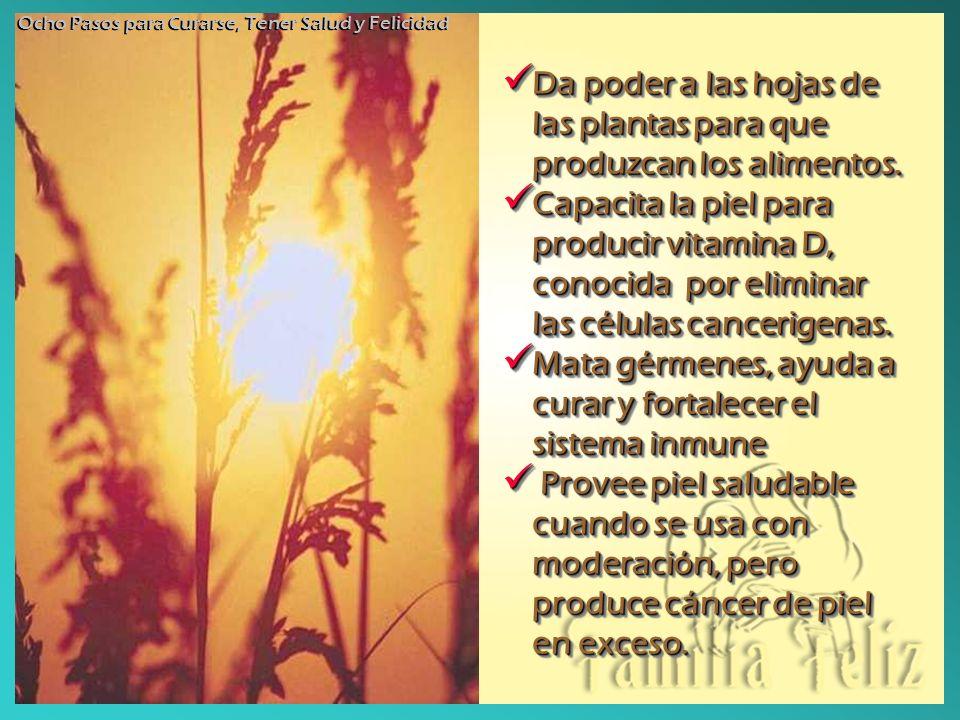 Da poder a las hojas de las plantas para que produzcan los alimentos. Da poder a las hojas de las plantas para que produzcan los alimentos. Capacita l