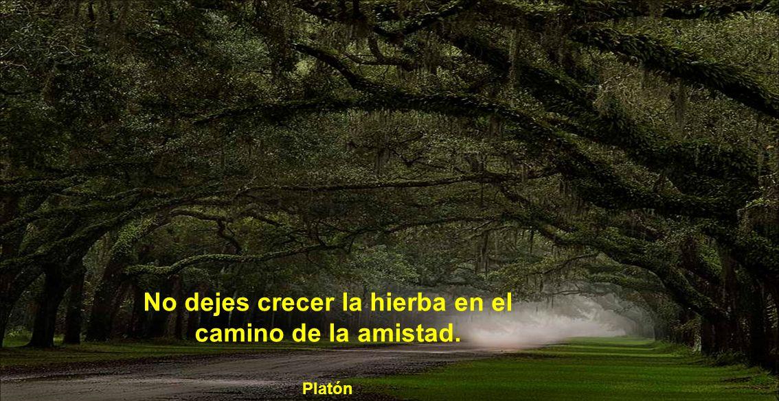 No dejes crecer la hierba en el camino de la amistad. Platón