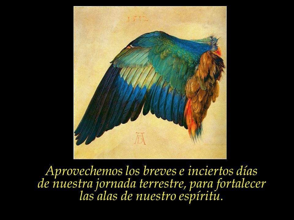 Nuestro cuerpo es apenas la jaula, mientras el espíritu es el pájaro... Nada tiene el pájaro que temer, sin embargo, con la destrucción de la jaula. E