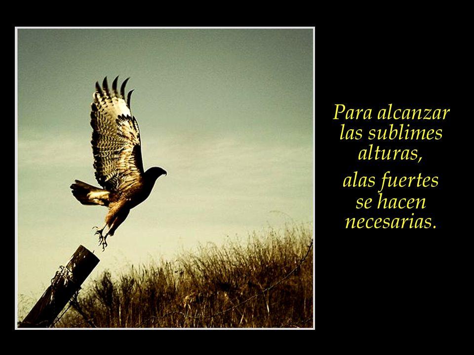 Al fin de cada día, evaluar si nuestras acciones, actitudes, pensamientos y palabras servirán para fortalecer las alas de nuestro espíritu. Los pájaro