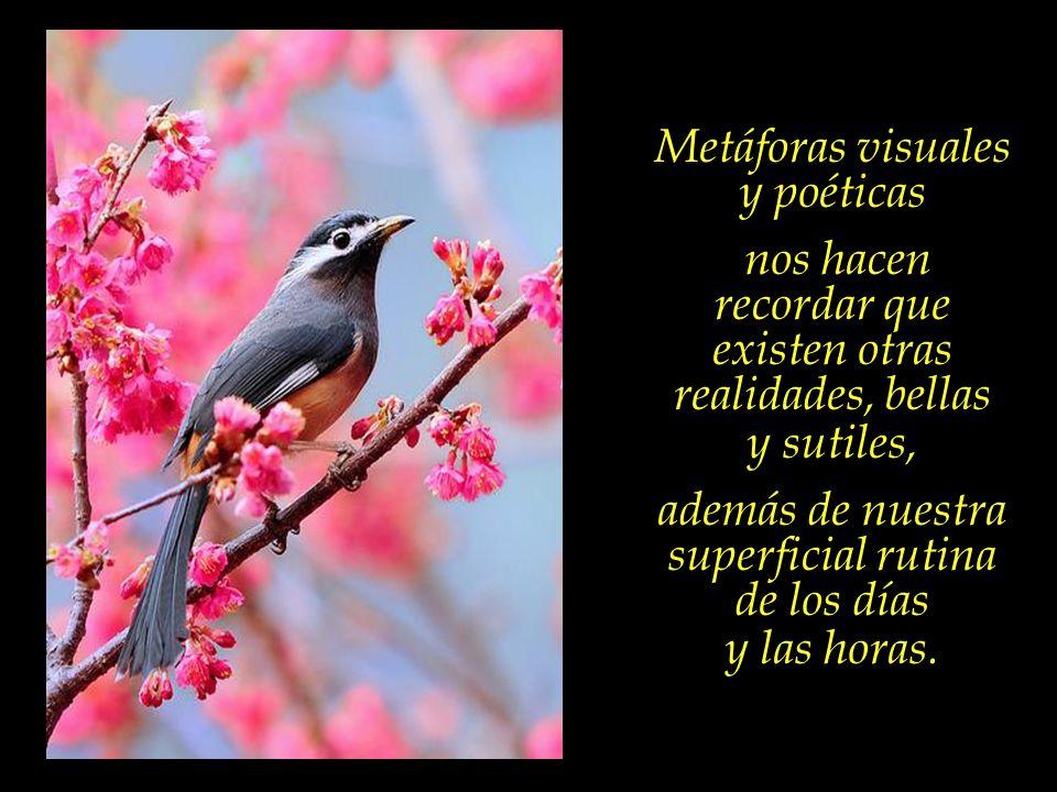 Para alcanzar las sublimes alturas, alas fuertes se hacen necesarias. Las aves, – la belleza de su plumaje, las melodías de su canto embriagante, la s