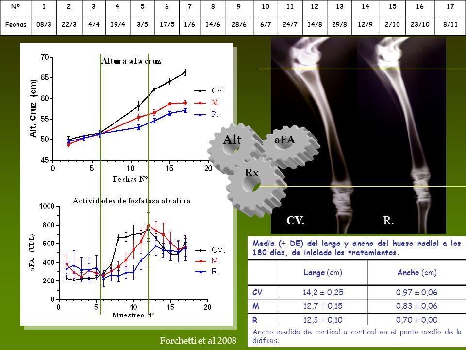 Media (± DE) del largo y ancho del hueso radial a los 180 días, de iniciado los tratamientos. Largo (cm)Ancho (cm) CV14,2 ± 0,250,97 ± 0,06 M12,7 ± 0,