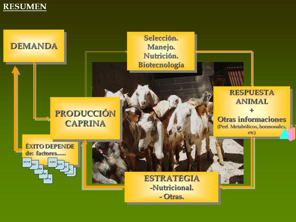 clima rumen ÉXITO DEPENDE de: factores...... forraje Bact. animal etc inter, Topg. agua suelo RESUMEN PRODUCCIÓN CAPRINA Selección.Manejo.Nutrición.Bi