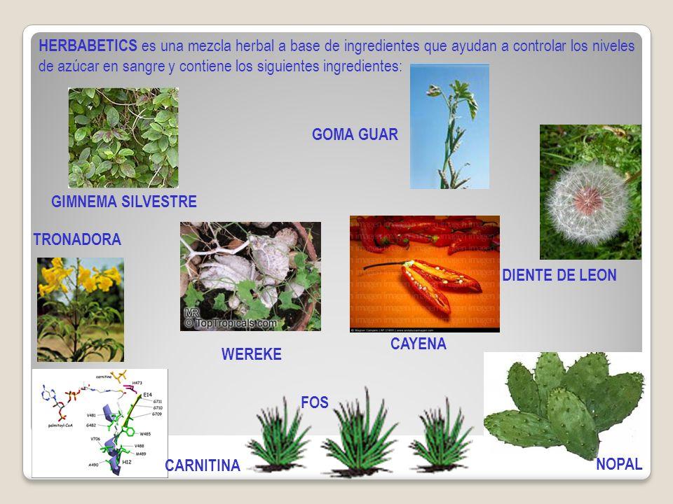 HERBABETICS es una mezcla herbal a base de ingredientes que ayudan a controlar los niveles de azúcar en sangre y contiene los siguientes ingredientes: GIMNEMA SILVESTRE WEREKE TRONADORA FOS CARNITINA GOMA GUAR DIENTE DE LEON CAYENA NOPAL