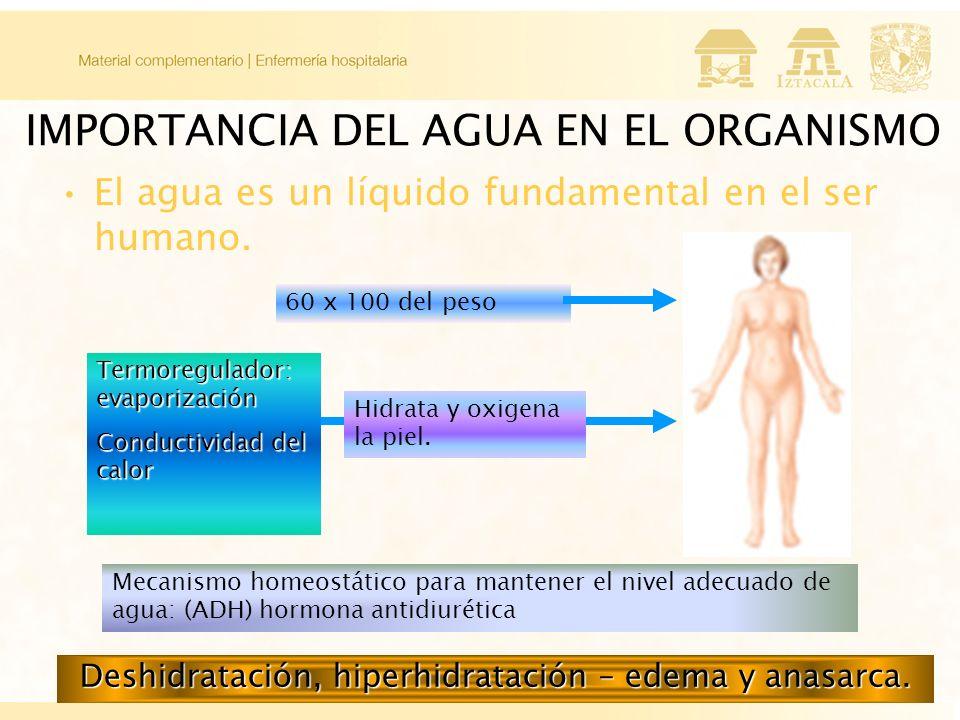 IMPORTANCIA DEL AGUA EN EL ORGANISMO El agua es un líquido fundamental en el ser humano.