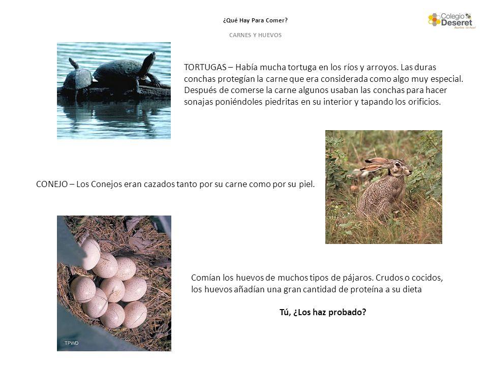¿Qué Hay Para Comer? CARNES Y HUEVOS Comían los huevos de muchos tipos de pájaros. Crudos o cocidos, los huevos añadían una gran cantidad de proteína