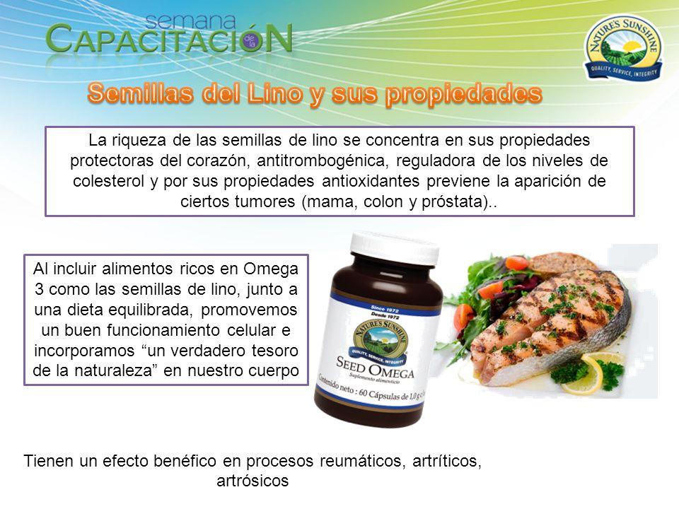 La riqueza de las semillas de lino se concentra en sus propiedades protectoras del corazón, antitrombogénica, reguladora de los niveles de colesterol