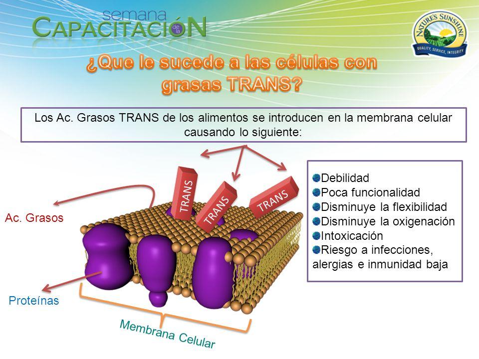 Ac. Grasos Proteínas TRANS Los Ac. Grasos TRANS de los alimentos se introducen en la membrana celular causando lo siguiente: TRANS Membrana Celular De