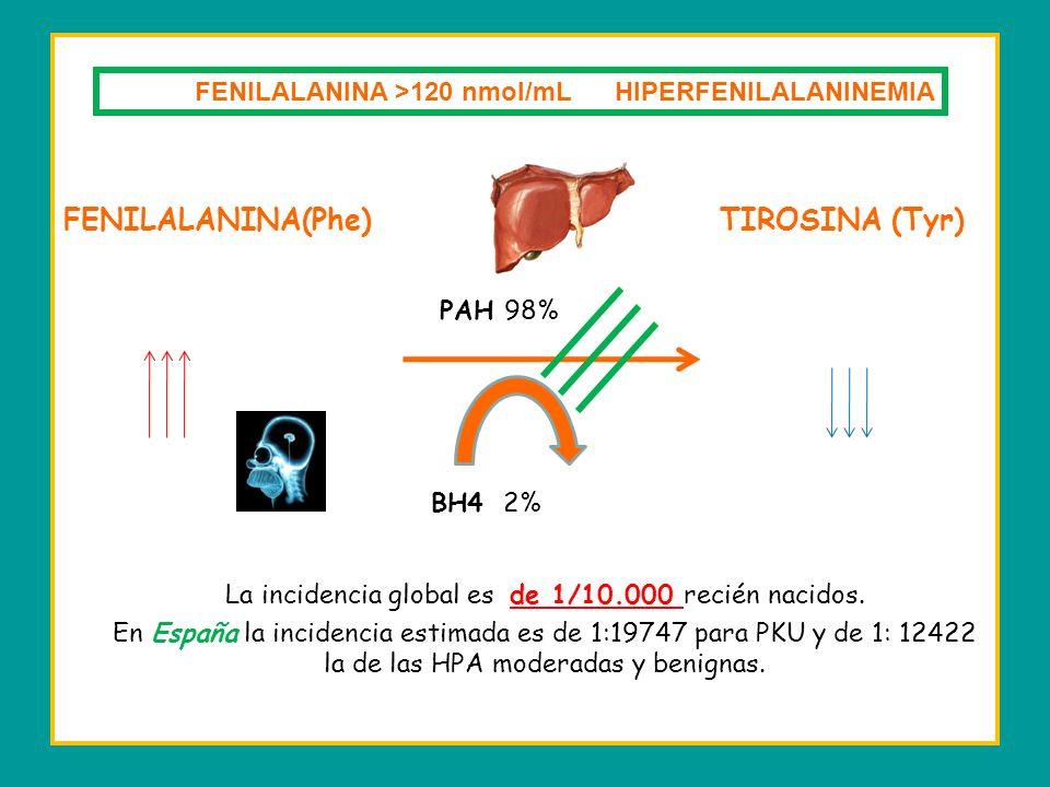 FENILALANINA(Phe) TIROSINA (Tyr) La incidencia global es de 1/10.000 recién nacidos. En España la incidencia estimada es de 1:19747 para PKU y de 1: 1