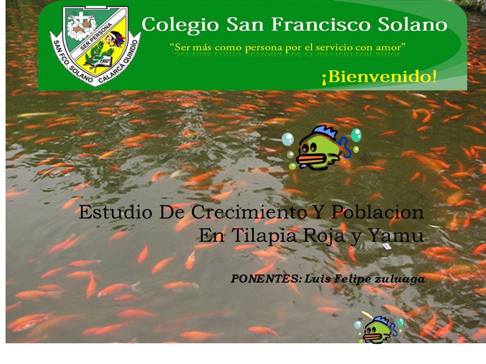 Estudio De Crecimiento Y Poblacion En Tilapia Roja y Yamu PONENTES: Luis Felipe zuluaga