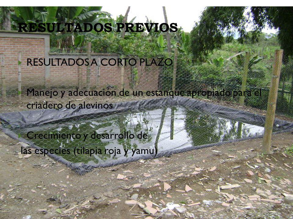 RESULTADOS PREVIOS RESULTADOS A CORTO PLAZO Manejo y adecuación de un estanque apropiado para el criadero de alevinos Crecimiento y desarrollo de las