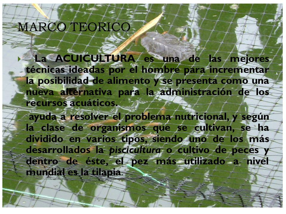 MARCO TEORICO La ACUICULTURA es una de las mejores técnicas ideadas por el hombre para incrementar la posibilidad de alimento y se presenta como una n