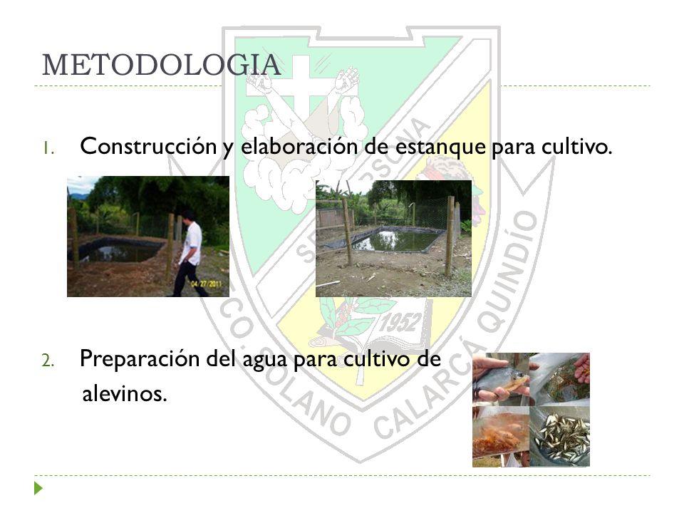 METODOLOGIA 1. Construcción y elaboración de estanque para cultivo. 2. Preparación del agua para cultivo de alevinos.