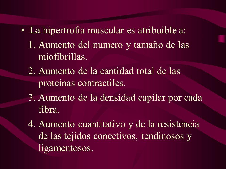 La hipertrofia muscular es atribuible a: 1.Aumento del numero y tamaño de las miofibrillas. 2.Aumento de la cantidad total de las proteínas contractil