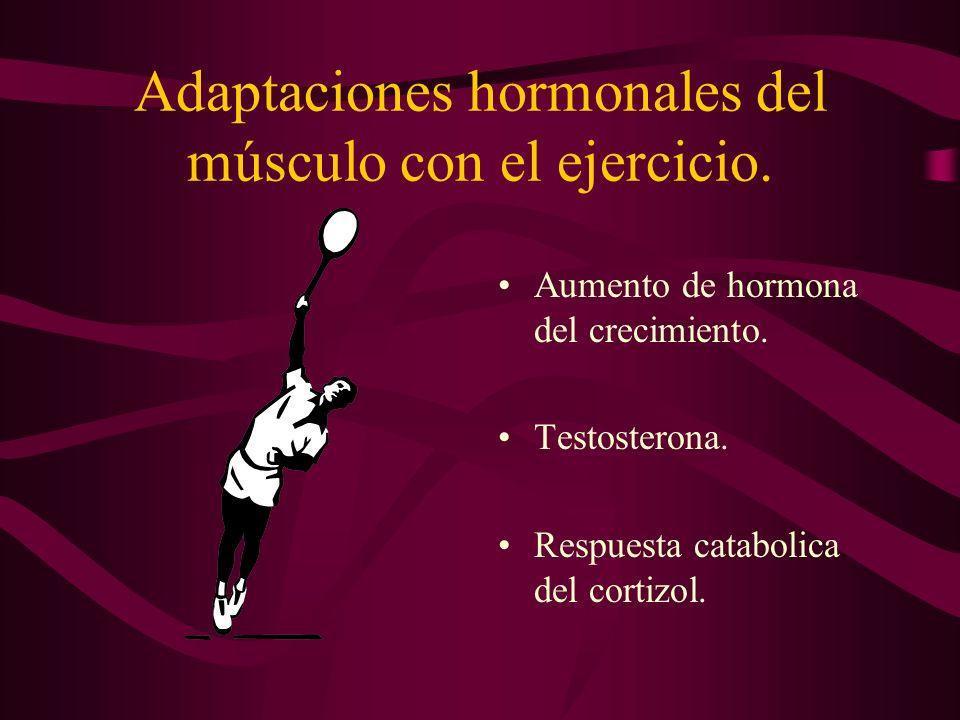 Adaptaciones hormonales del músculo con el ejercicio. Aumento de hormona del crecimiento. Testosterona. Respuesta catabolica del cortizol.