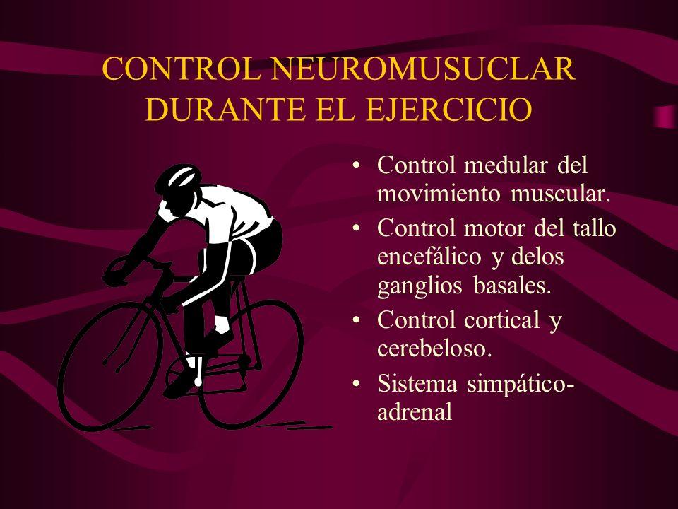 CONTROL NEUROMUSUCLAR DURANTE EL EJERCICIO Control medular del movimiento muscular. Control motor del tallo encefálico y delos ganglios basales. Contr