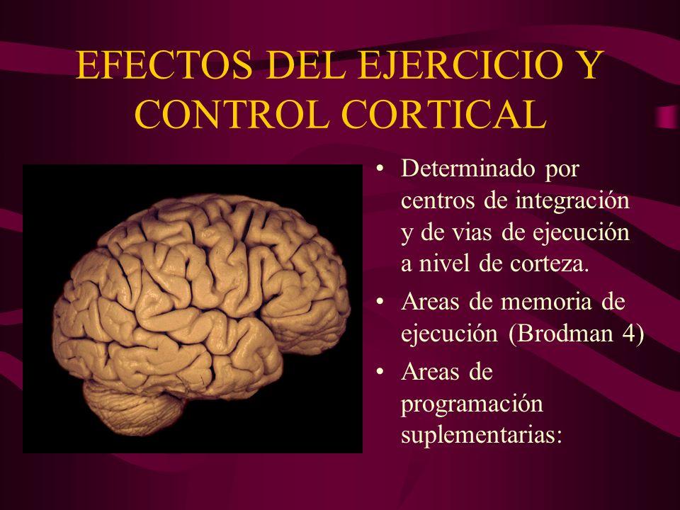 EFECTOS DEL EJERCICIO Y CONTROL CORTICAL Determinado por centros de integración y de vias de ejecución a nivel de corteza. Areas de memoria de ejecuci