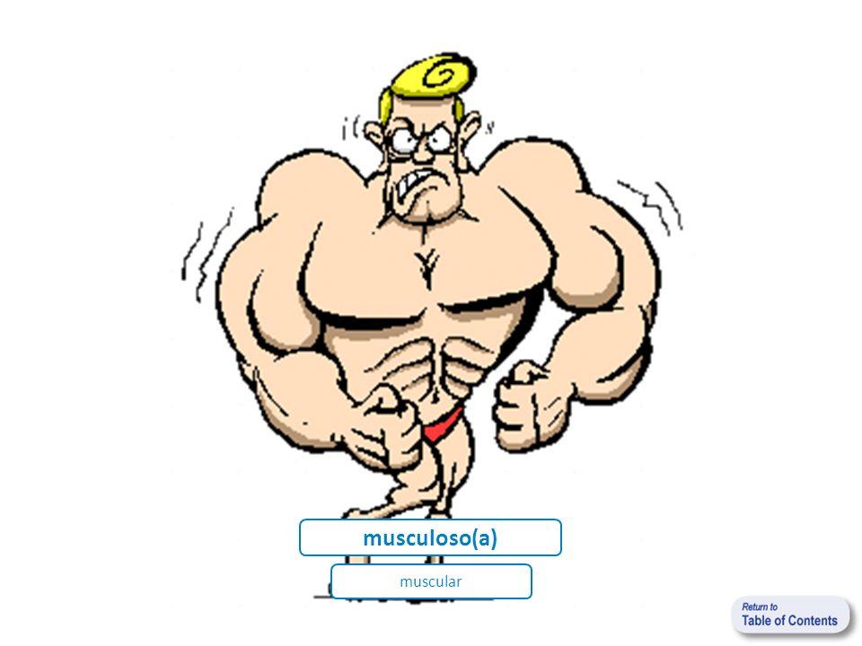 musculoso(a) muscular