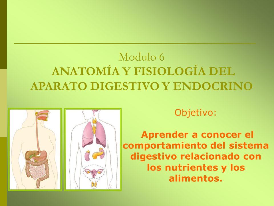 Modulo 6 ANATOMÍA Y FISIOLOGÍA DEL APARATO DIGESTIVO Y ENDOCRINO Objetivo: Aprender a conocer el comportamiento del sistema digestivo relacionado con