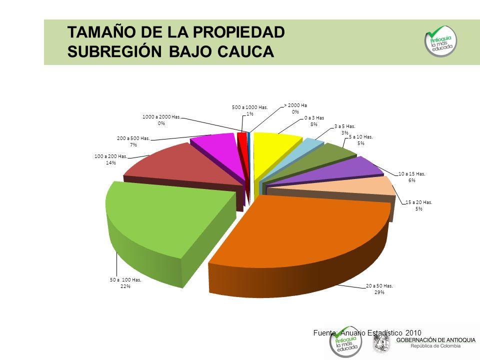 Fuente: Anuario Estadístico 2010 TAMAÑO DE LA PROPIEDAD SUBREGIÓN BAJO CAUCA