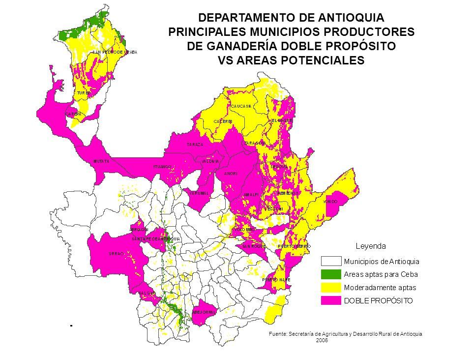 DEPARTAMENTO DE ANTIOQUIA PRINCIPALES MUNICIPIOS PRODUCTORES DE GANADERÍA DOBLE PROPÓSITO VS AREAS POTENCIALES Fuente: Secretaría de Agricultura y Des