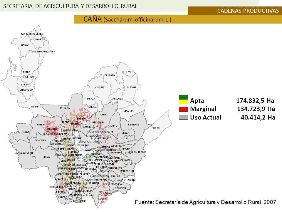 SECRETARIA DE AGRICULTURA Y DESARROLLO RURAL CADENAS PRODUCTIVAS CAÑA (Saccharum officinarum L.) Apta 174.832,5 Ha Marginal 134.723,9 Ha Uso Actual 40