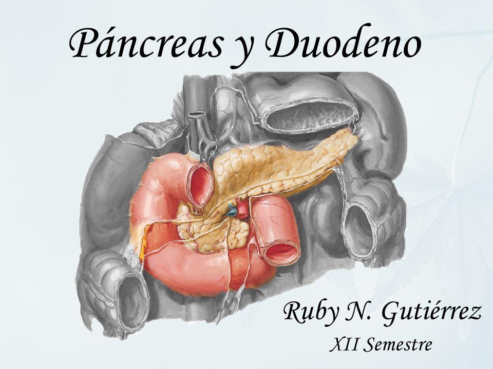 Páncreas y Duodeno Ruby N. Gutiérrez XII Semestre