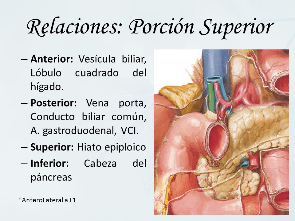 – Anterior: Vesícula biliar, Lóbulo cuadrado del hígado. – Posterior: Vena porta, Conducto biliar común, A. gastroduodenal, VCI. – Superior: Hiato epi