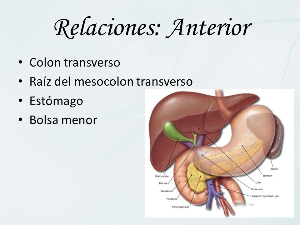 Relaciones: Anterior Colon transverso Raíz del mesocolon transverso Estómago Bolsa menor