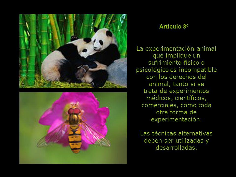 Todo animal de trabajo tiene derecho a una limitación razonable del tiempo e intensidad del trabajo, a una alimentación reparadora y al reposo.