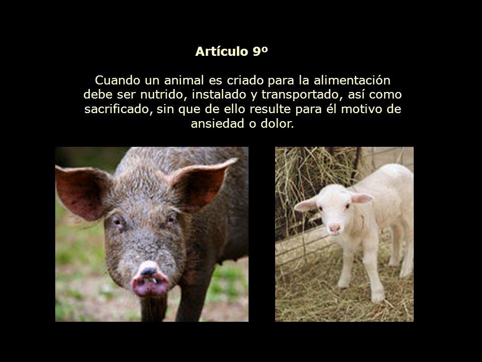 La experimentación animal que implique un sufrimiento físico o psicológico es incompatible con los derechos del animal, tanto si se trata de experimentos médicos, científicos, comerciales, como toda otra forma de experimentación.