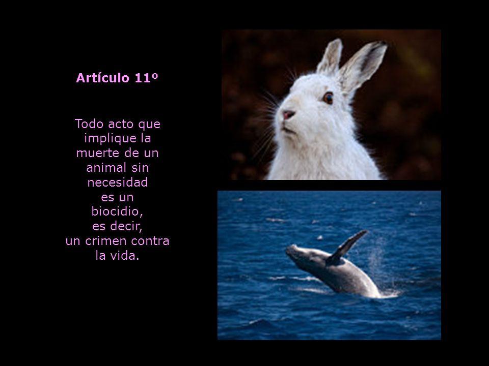 Ningún animal debe ser explotado para esparcimiento del hombre.