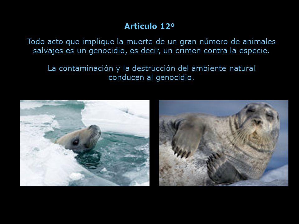 Todo acto que implique la muerte de un animal sin necesidad es un biocidio, es decir, un crimen contra la vida.