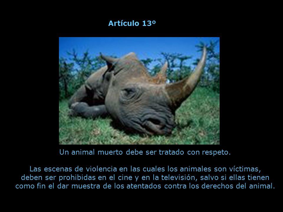 Todo acto que implique la muerte de un gran número de animales salvajes es un genocidio, es decir, un crimen contra la especie.