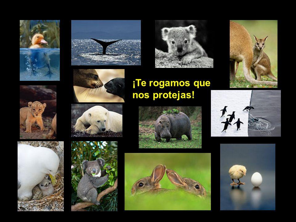 Los organismos de protección y salvaguarda de los animales, deben ser representados a nivel gubernamental.