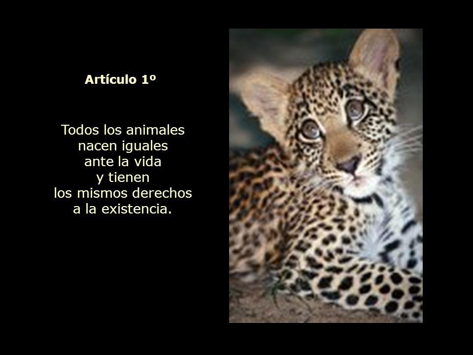 Declaración Universal de los Derechos del Animal Todo es Vida y, por ello, todo está íntimamente unido entre sí.