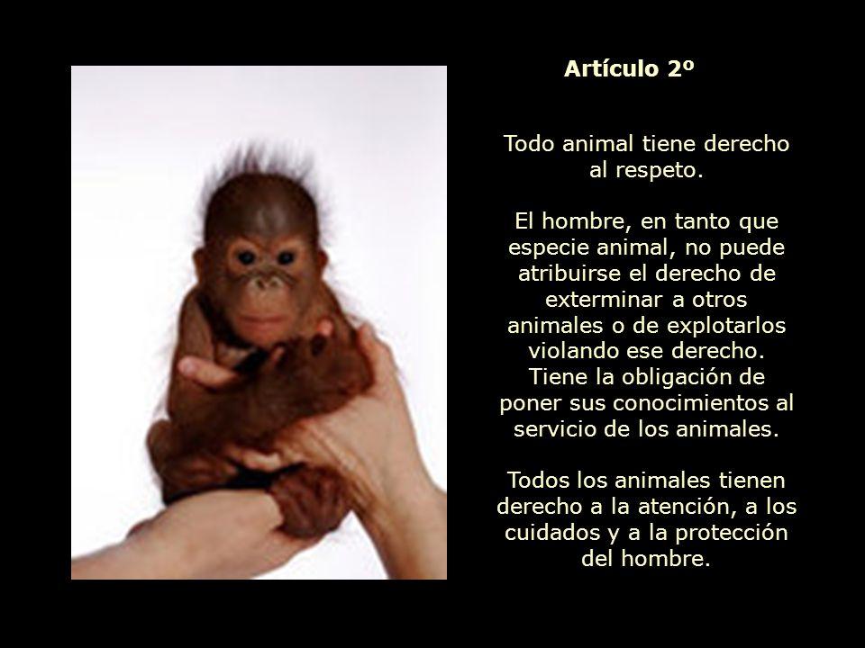 Todos los animales nacen iguales ante la vida y tienen los mismos derechos a la existencia.