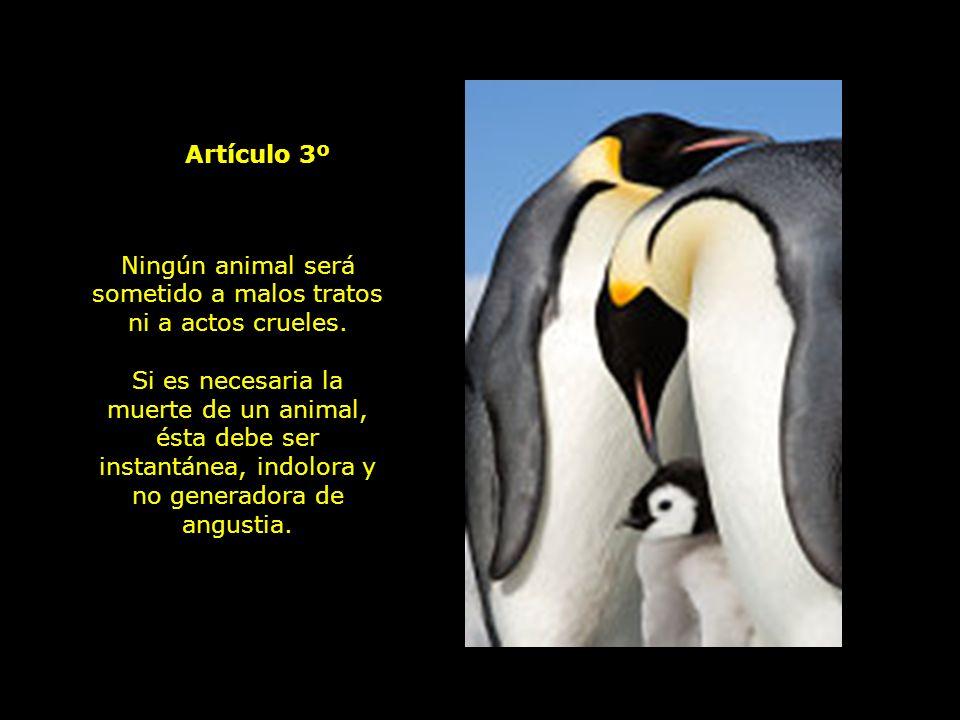 Todo animal tiene derecho al respeto.