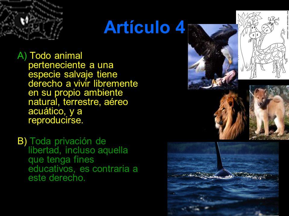 Artículo 4 A) Todo animal perteneciente a una especie salvaje tiene derecho a vivir libremente en su propio ambiente natural, terrestre, aéreo acuátic