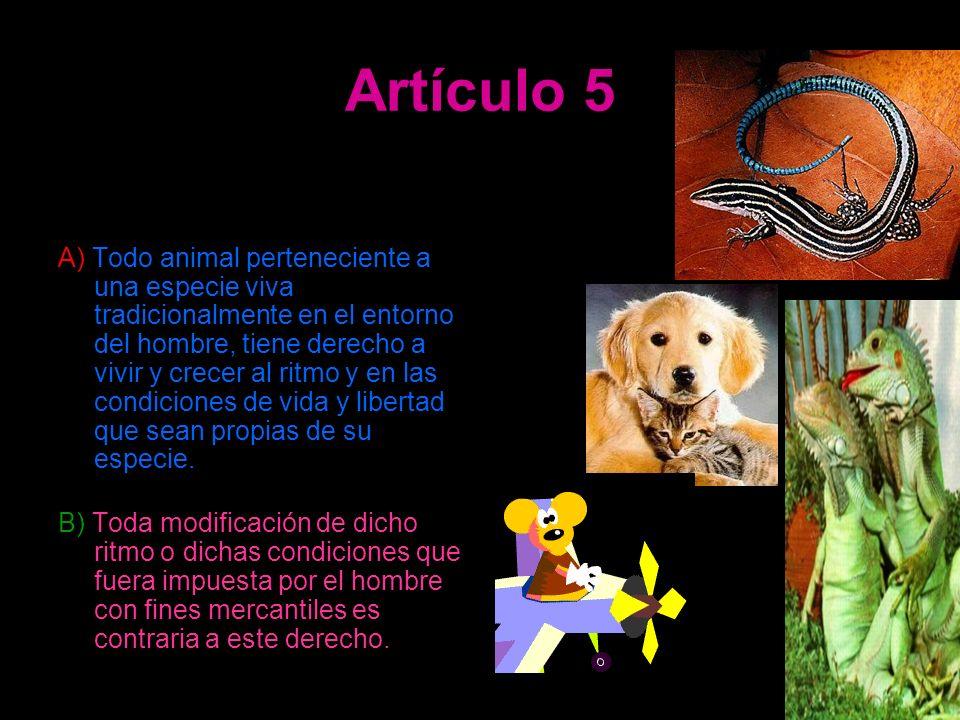 Artículo 5 A) Todo animal perteneciente a una especie viva tradicionalmente en el entorno del hombre, tiene derecho a vivir y crecer al ritmo y en las