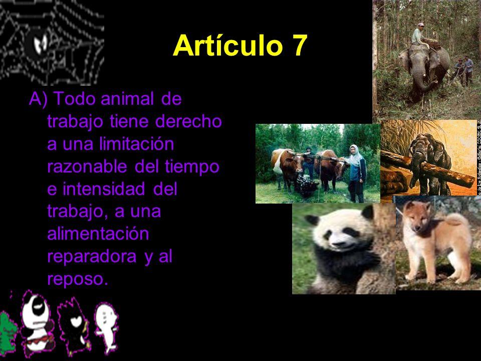 Artículo 7 A) Todo animal de trabajo tiene derecho a una limitación razonable del tiempo e intensidad del trabajo, a una alimentación reparadora y al